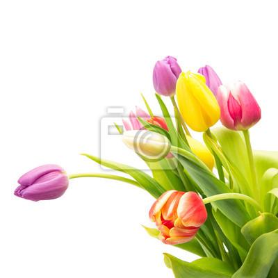 Fotomural bouquet tulipa no branco