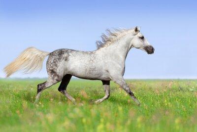 Fotomural Branca, cavalo, trotting, verão, prado