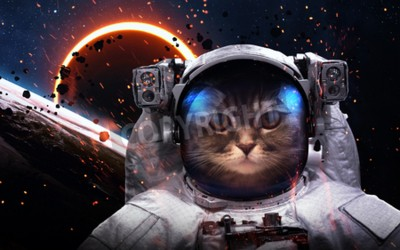 Fotomural Brave cat astronaut at the spacewalk. This image elements furnished by NASA