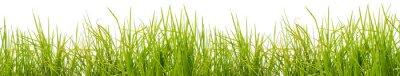 Fotomural Brins d'herbe, fond blanc