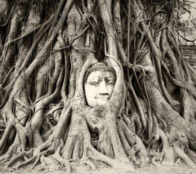 Fotomural Buddha, cabeça, árvore, raizes, wat, Mahathat, Ayutthaya, tailandia