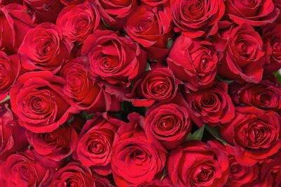 Fotomural Buquê de flores coloridas de rosas vermelhas para uso como fundo.