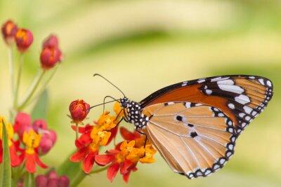 Fotomural Butterfly on Flower
