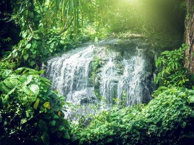 Fotomural Cachoeira em selvas de Seychelles, ilha Mahe