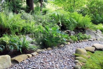 Fotomural Caminho do jardim da sombra da floresta, forrado com Hosta e samambaia.