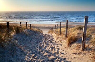 Fotomural caminho para a praia do mar do Norte na luz do sol de ouro