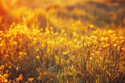 Fotomural Campo de flores da primavera
