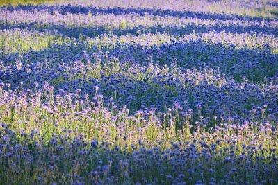 Fotomural Campo de flores roxo
