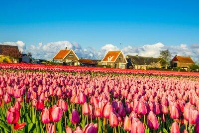 Fotomural campo tulipas, canal irigation e moinhos de vento névoa