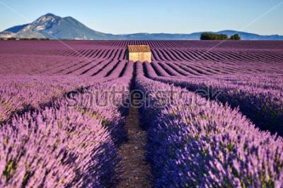 Fotomural Campos de lavanda linda e uma casa velha em Provence