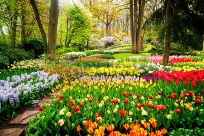 Fotomural Canteiros de tulipas coloridas e caminho em um jardim formal de primavera, em tons retrô