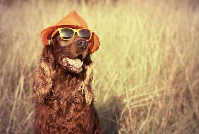 Fotomural cão engraçado