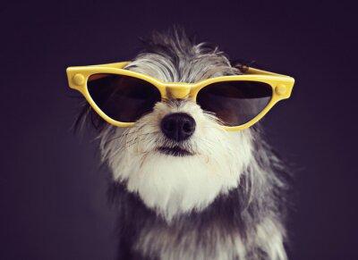 Fotomural Cão, óculos