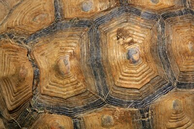 Fotomural carapaça de tartaruga