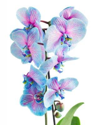 Fotomural Caule, azul, orquídeas