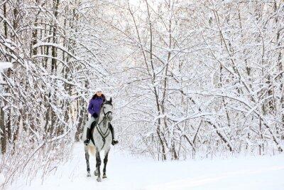 Fotomural Cavaleiro no cavalo na borda da floresta coberta de neve no inverno