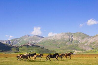 Fotomural Cavalli al Galoppo nei pressi di Castelluccio