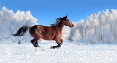 Fotomural Cavalo