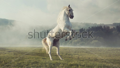 Fotomural Cavalo branco selvagem