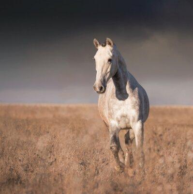 Fotomural Cavalo cinzento