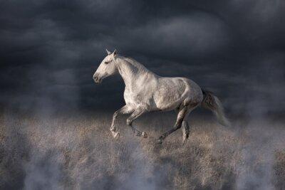 Fotomural Cavalo cinzento Lusitanian