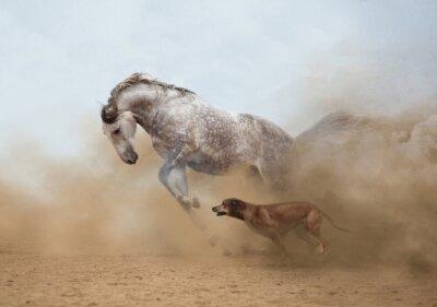 Fotomural Cavalo lusitano