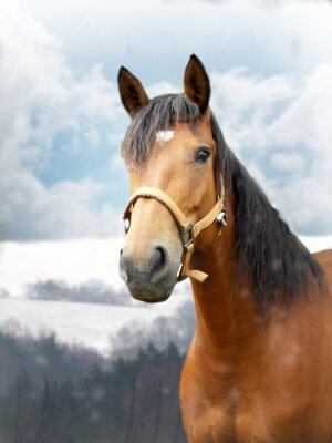 Fotomural Cavalo no inverno