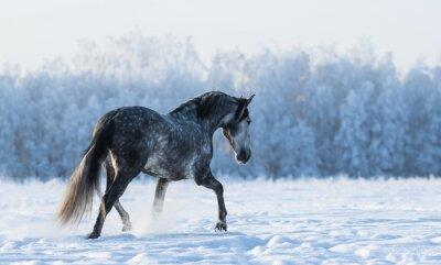 Fotomural Cavalo solitário anda no campo