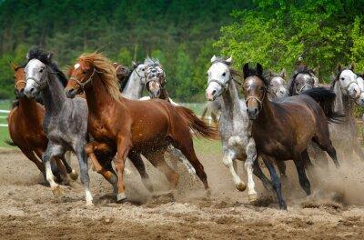 Fotomural Cavalos árabes galopar