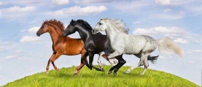 Fotomural Cavalos, corrida, galope, verde, pasto, contra, bonito, céu
