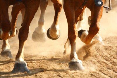 Fotomural Cavalos galopantes do cavalo