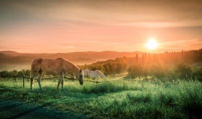 Fotomural Cavalos selvagens e nascer do sol de tuscan