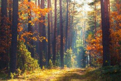 Fotomural Cena da floresta do outono