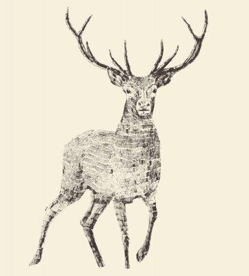 Fotomural Cervos gravura, ilustração do vintage, Vector