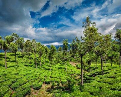 Fotomural Chá, plantações, montanhas
