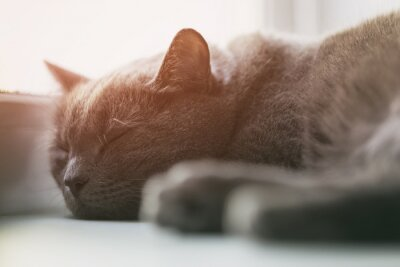 Fotomural Cinzento, gato, dormir, janela, vindima, toned
