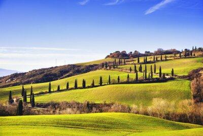 Fotomural Cipreste, árvores, panorâmico, estrada Siena, Toscânia, Italy.