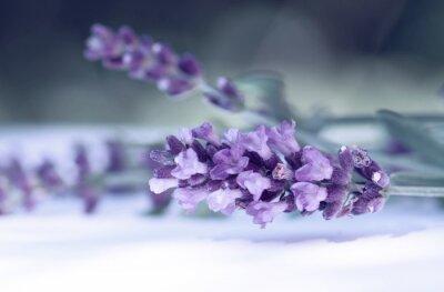 Fotomural Cloce acima da flor da alfazema