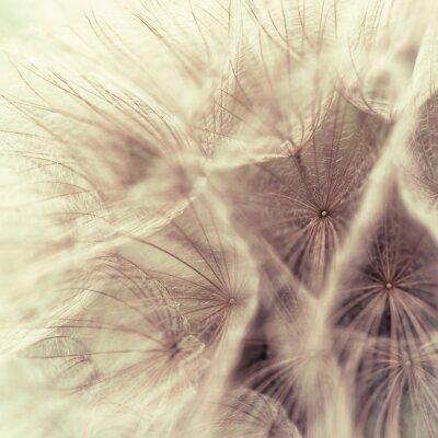 Fotomural Close up abstrato de um salsifis prado