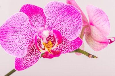 Fotomural Close-up da flor da orquídea
