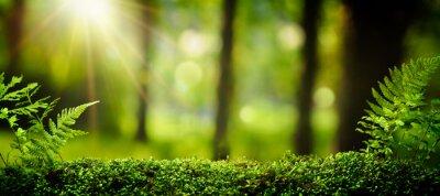 Fotomural Closeup no musgo na floresta