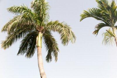 Fotomural Coco e céu azul na praia do verão