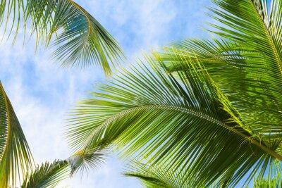 Fotomural Coco, palma, árvore, folhas
