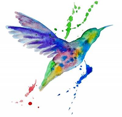 Fotomural colibri coloridos no fundo branco