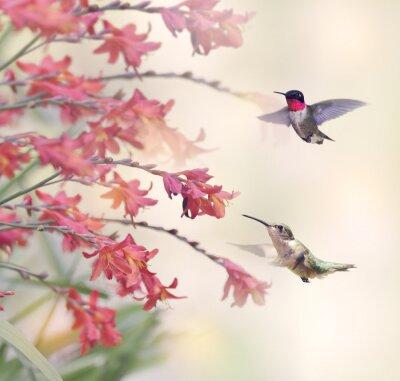 Fotomural Colibris e flores vermelhas