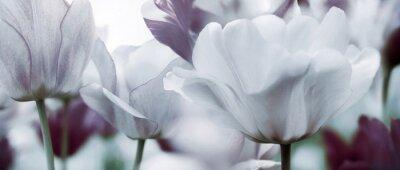 Fotomural Conceito de tulipas