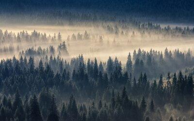 Fotomural Coniferous, floresta, nebuloso, montanhas