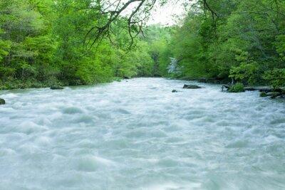 Fotomural Córrego na floresta verde