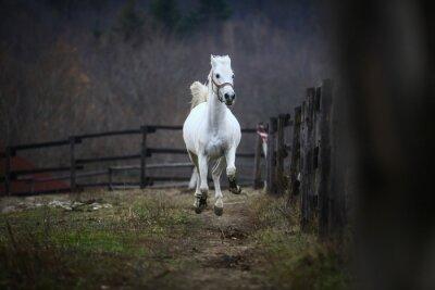 Fotomural Correndo cavalo branco