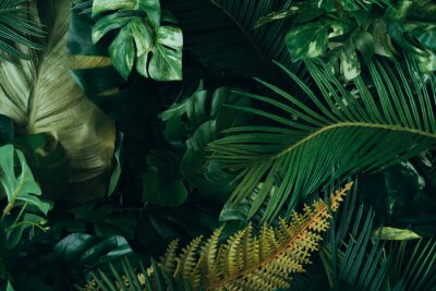 Fotomural Creative layout made of tropical leaves. Flat lay. Nature concept.